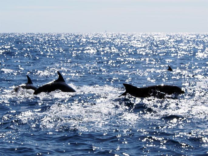 イルカの大群を逆光で撮影