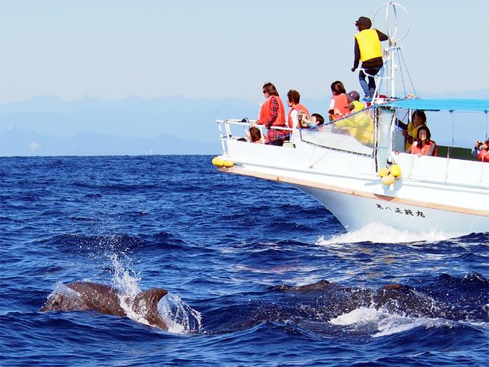 船の近くを泳ぐイルカ