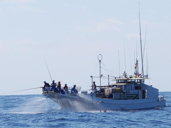カツオの1本釣り漁