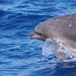 高知駅・高知空港から最も近い「ホエールウォッチング・宇佐」で、野生のイルカとクジラを見てきた。