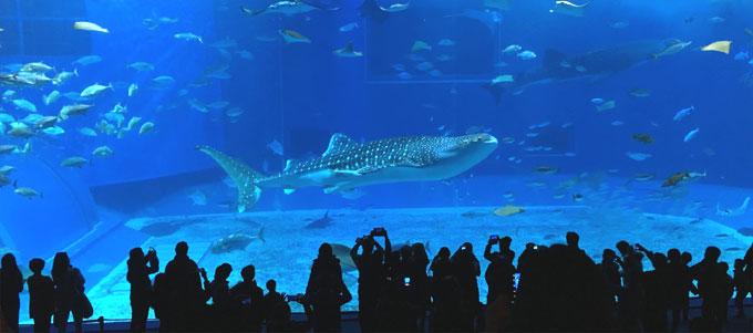 沖縄 美ら海水族館(ちゅら海水族館)