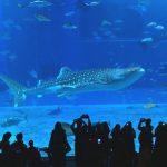美ら海水族館の入場料を安く割引で買う方法、割引券情報 まとめ