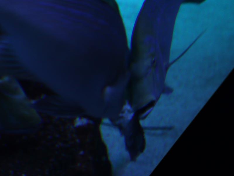 水槽内で食べられた小魚