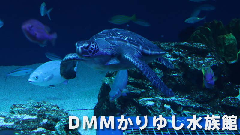 DMMかりゆし水族館の入場料を安く割引で買う方法、割引券情報。口コミ・レビューも